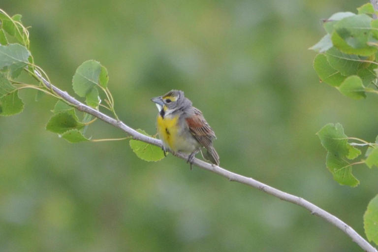 Assessment of variation of nest survival for grassland birds due to method of nest discovery