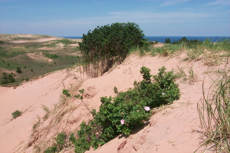 Influence of spotted knapweed on diversity and abundance of small mammals in Grand Sable Dunes, Michigan, USA