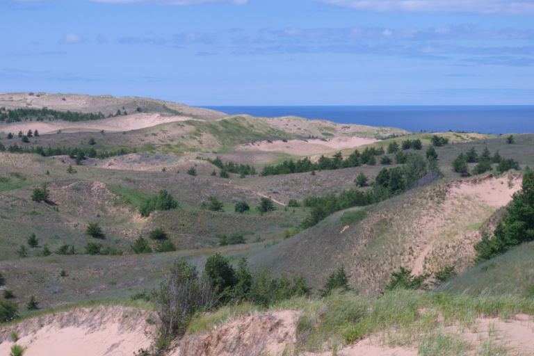 Effects of forest patch characteristics on small mammal species composition, Grand Sable Dunes, Michigan
