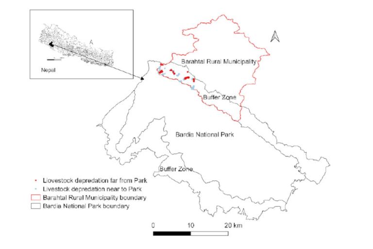 Livestock depredation by leopards and tigers near Bardia National Park, Nepal