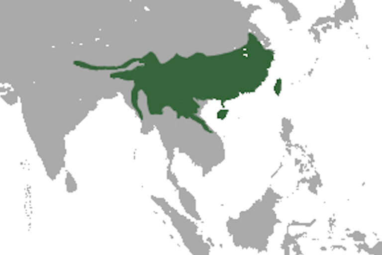 Estimating occupancy of Chinese pangolin (Manis pentadactyla) in a protected and non‐protected area of Nepal