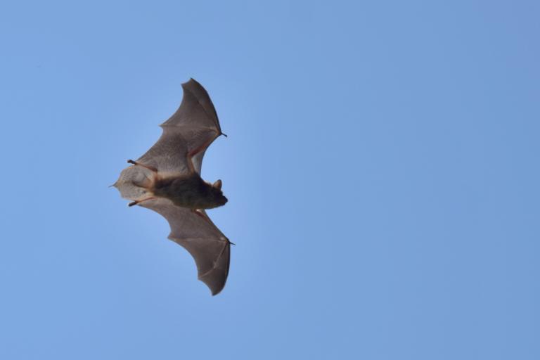 Bat incidents with U.S. civil aircraft
