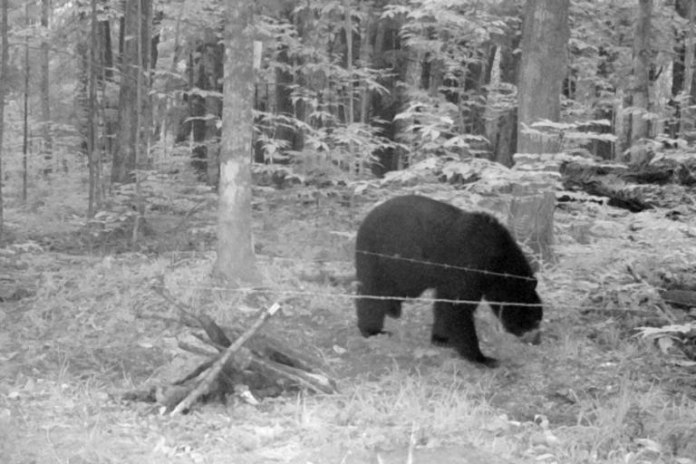 Trap array configuration influences estimates and precision of black bear density and abundance