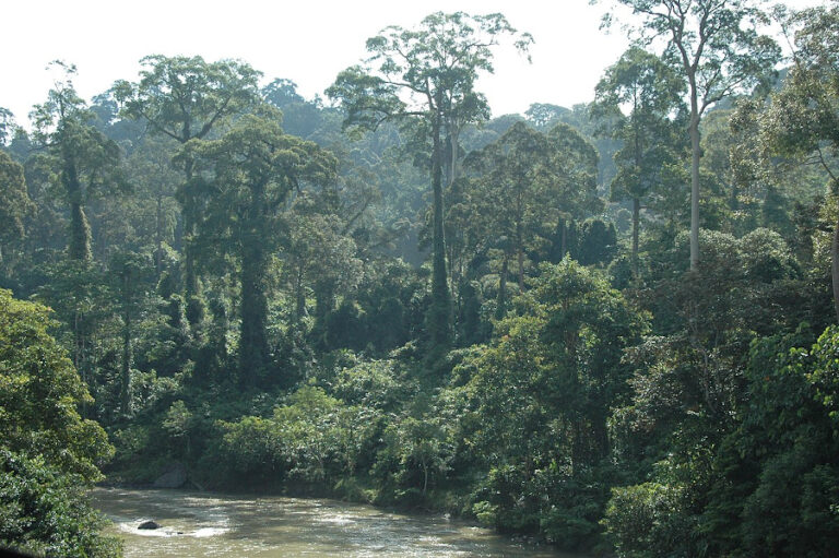 Fine-scale distributions of carnivores in a logging concession in Sarawak, Malaysian Borneo