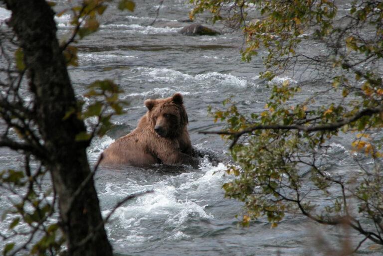 Influences of landscape heterogeneity on home-range sizes of brown bears