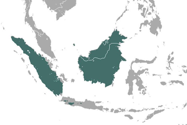 Habitat associations of the Sunda stink-badger Mydaus javanensis in three forest reserves in Sabah, Malaysian Borneo