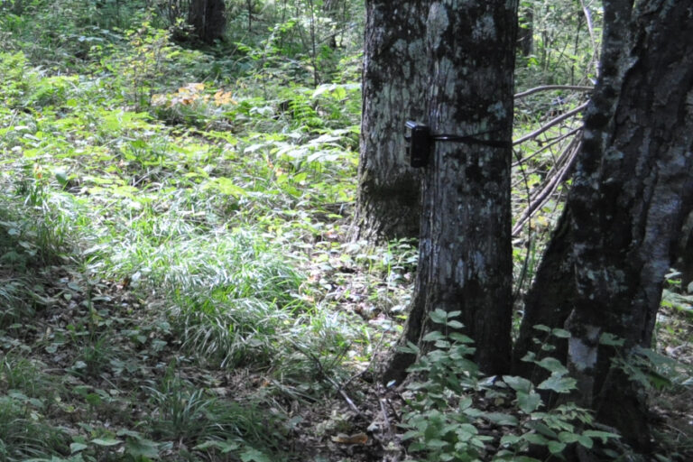 Influence of body mass, sociality, and movement behavior on improved detection probabilities when using a second camera trap