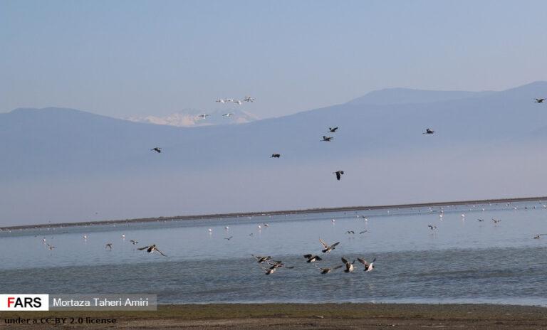 Mass mortality of migratory birds in Iran