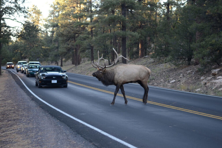 Research note: A 50-year increase in vehicle mortality of North American mammals