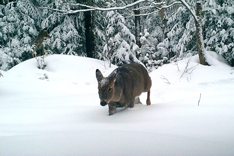 Influence of body mass and environmental conditions on winter mortality risk of a northern ungulate: Evidence for a late‐winter survival bottleneck