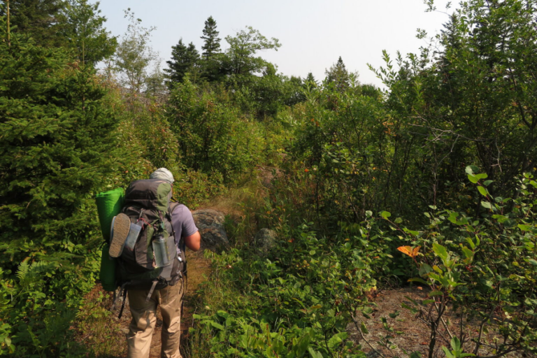 Researchers to track human impacts on Isle Royale wildlife