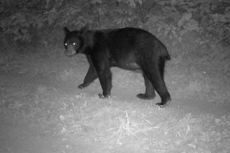 Spatial distribution of black bear incident reports in Michigan