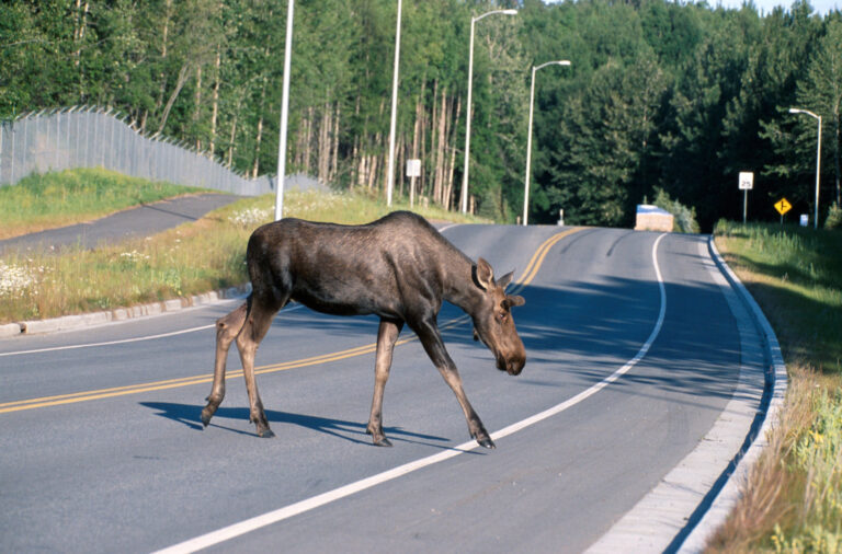 A review of ecological factors promoting road use by mammals