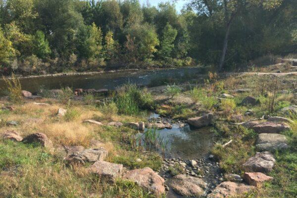 West Vine Outfall - Habitat