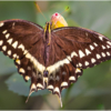october-open-b_swallowtail-butterfly_ellen-stein_top-award_20161024