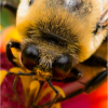 March Assigned AMacro and Closeup_Bug Eyes_Christine Cuthbertson_Honorable Mention_20170327