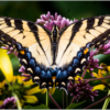 March Assigned BMacro and Closeup_Rainbow Wings_Dyan Bryson_Honorable Mention_20170327