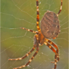 March Assigned SalonMacro and Closeup_Arachnid #2_Ron Denk_Top Award_20170327