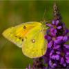 Butterfly_Michael Augustyniak_Open Salon_Equal Merit