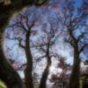 Dancing Tree Patterns_Nick Palmieri_Assigned Salon Textures & Patterns_Equal Merit