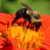 Looking for pollen_Ron Sammond_Open B_Equal Merit