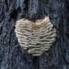 Tree Lover_Arlene Sopranzetti_Assigned B Textures & Patterns_Honorable Mention