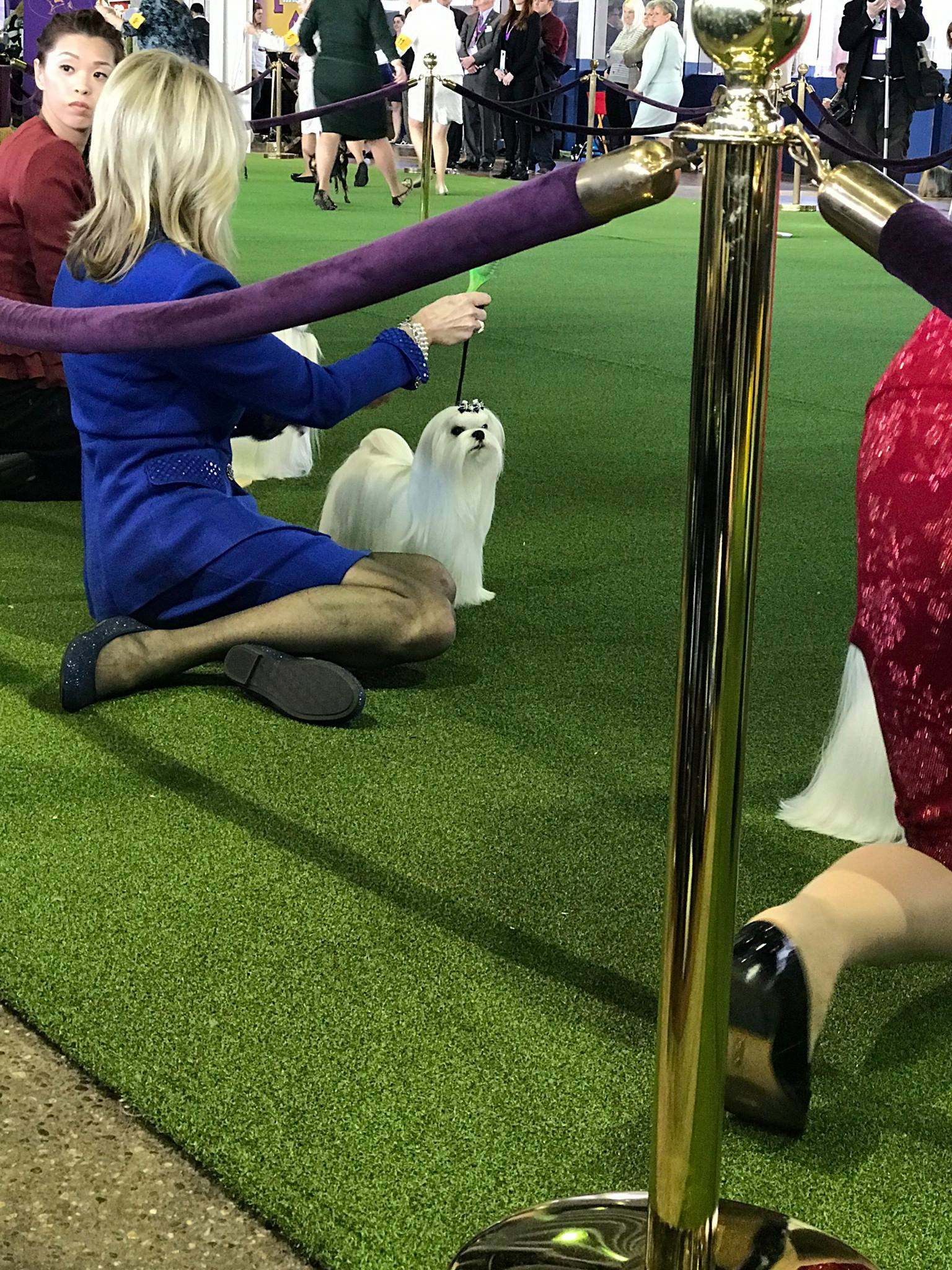 Fox and I showing at Westminster