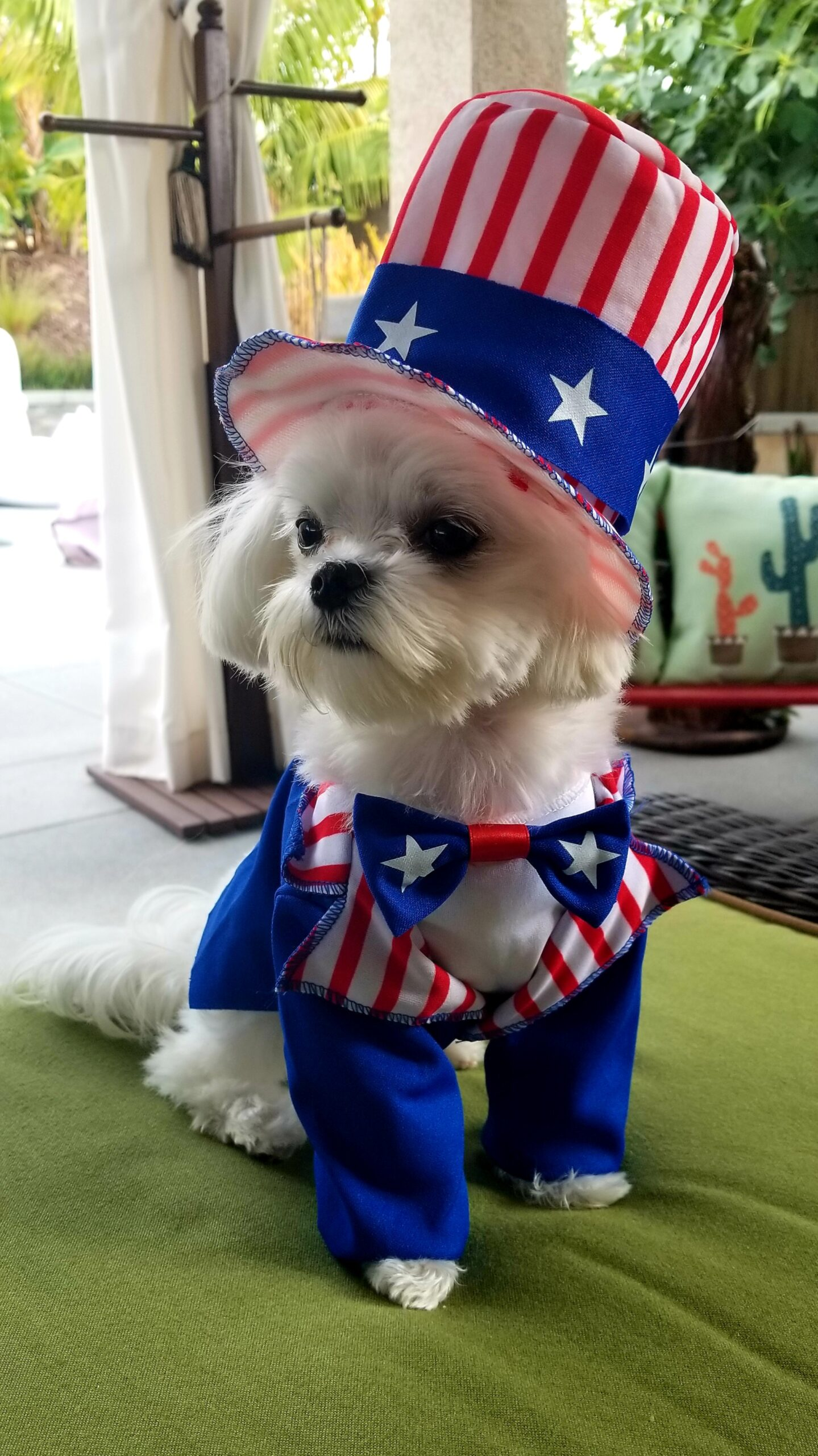 """""""Ripple"""" says Happy 4th of July!!"""