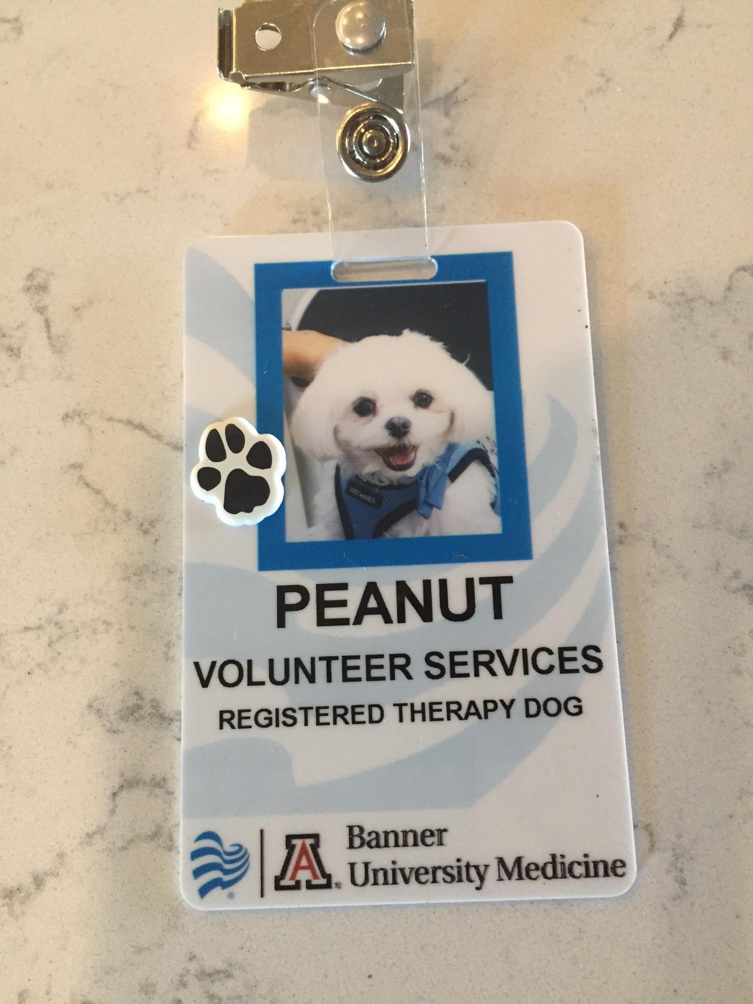 Peanut--Registered Therapy Dog
