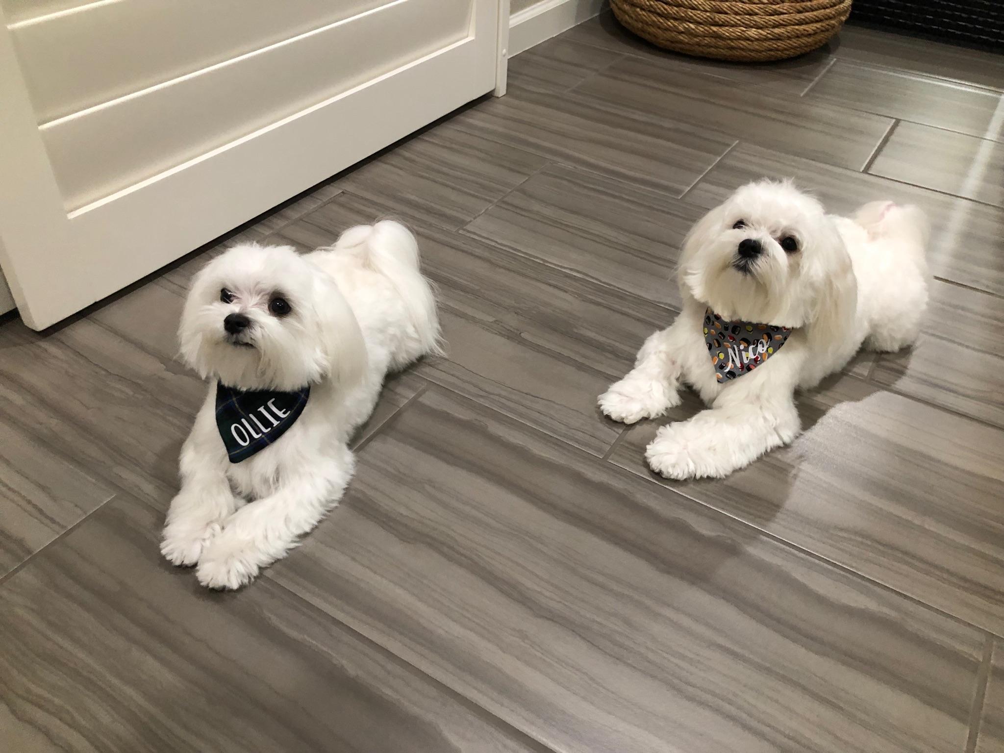 Brothers- Ollie & Nico