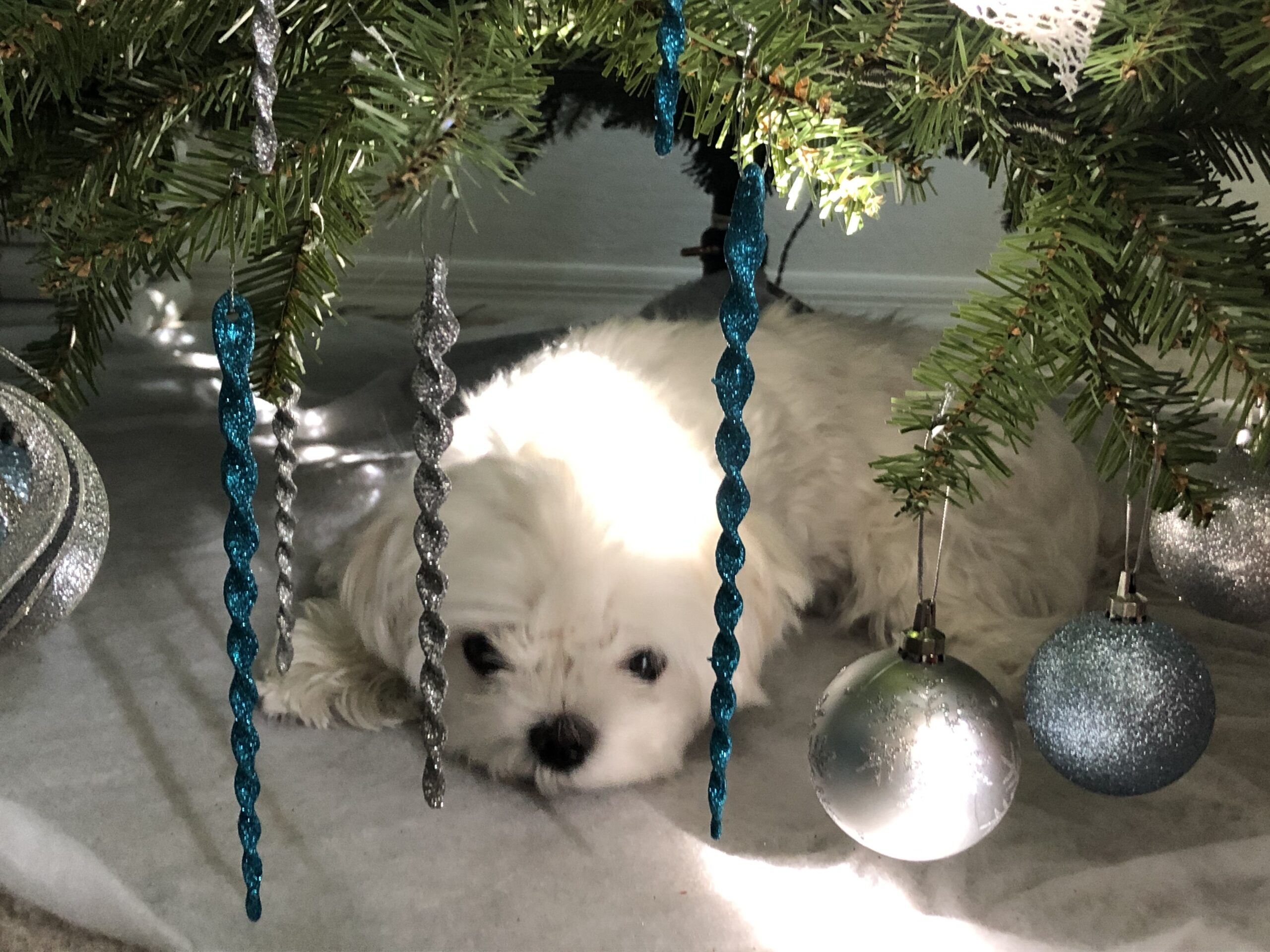 Achilles at Christmas