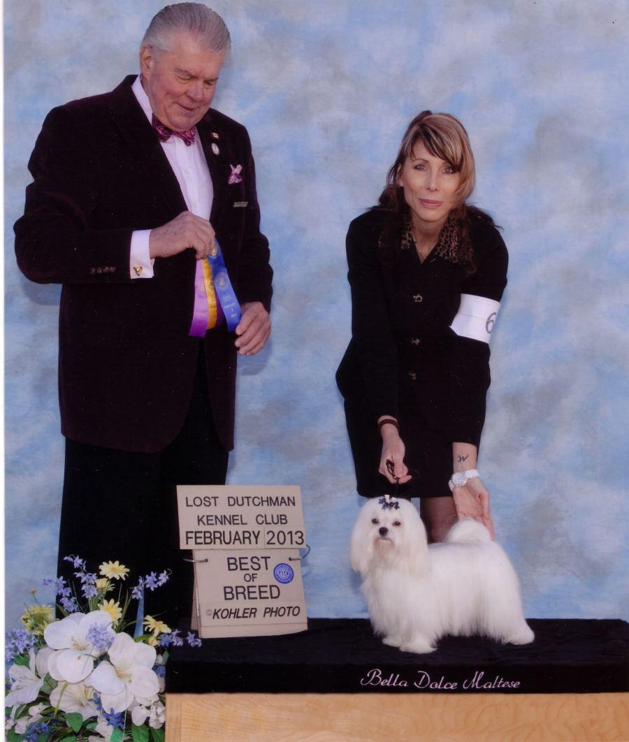 Maltese-Dog-Gem-Best-Of-Breed