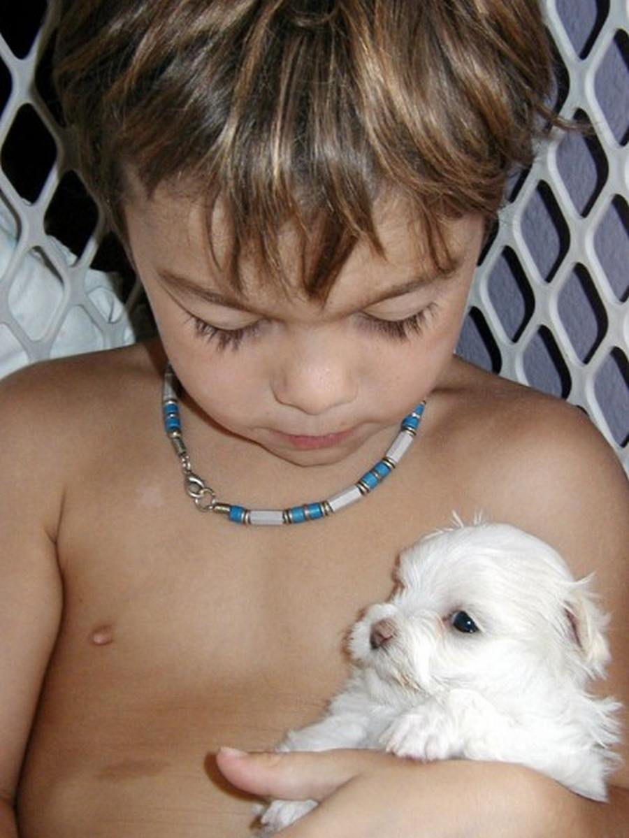 Griffon with puppy