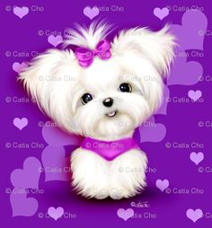 maltese puppy puppies teacup t-cup