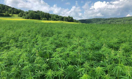 Need to Know: Investing in Cannabis Stocks