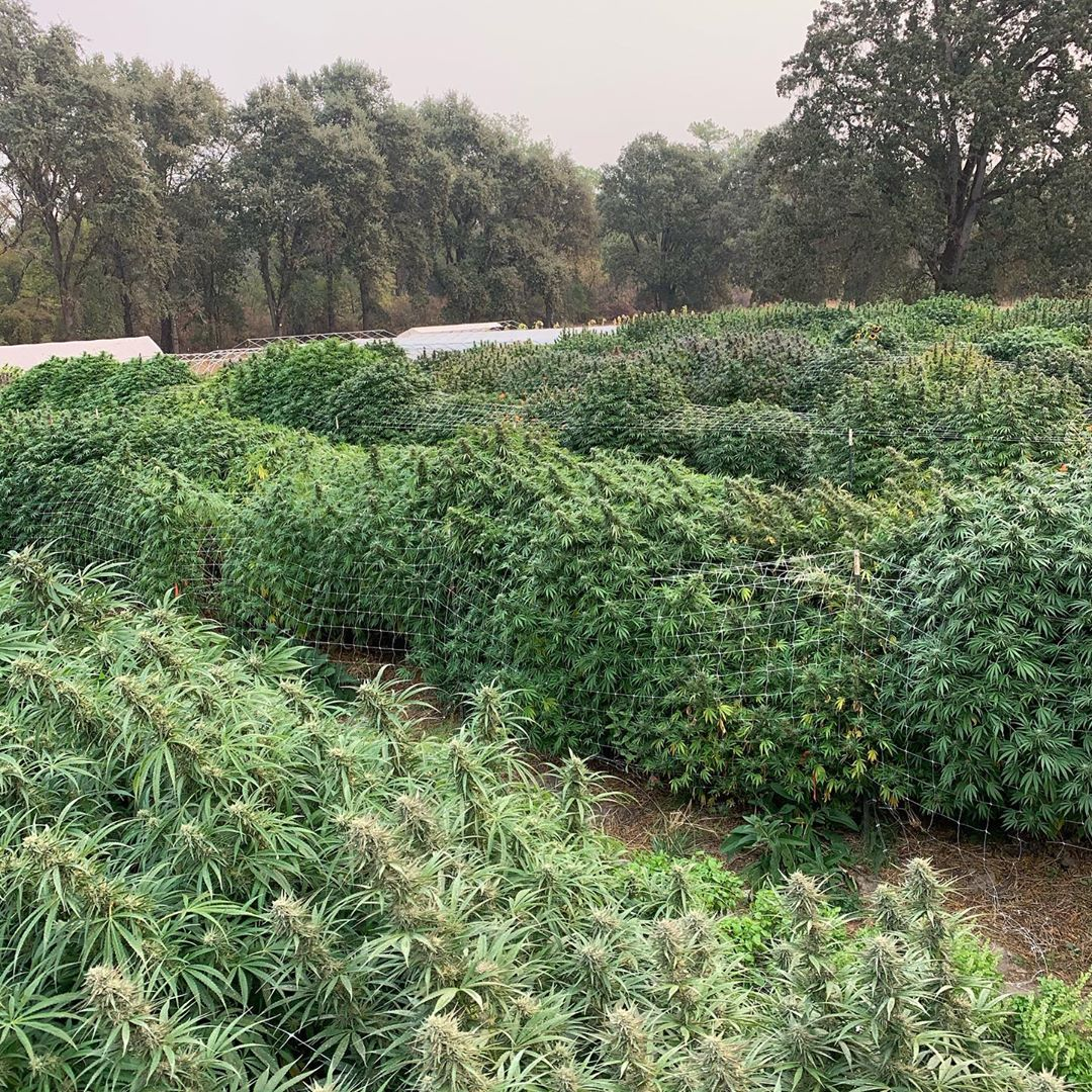 Radicle Herbs Farm