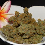 What makes GREAT Cannabis?