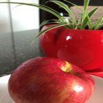 [나은혜 칼럼] 약속의 빨간사과