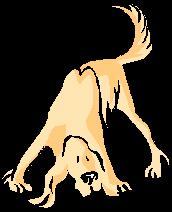 trackingdog