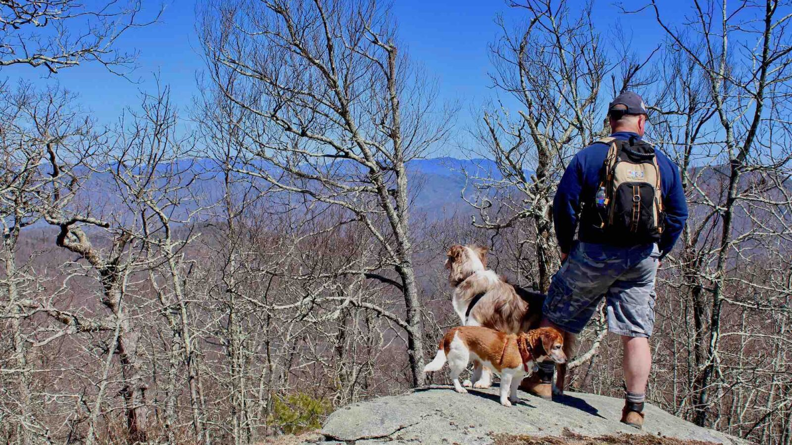 Dog Friendly National Parks