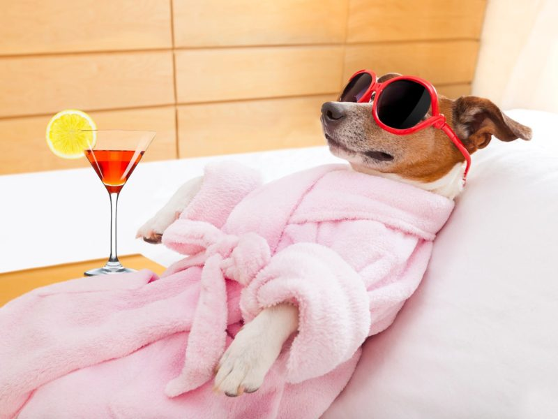 Dog Spa Day