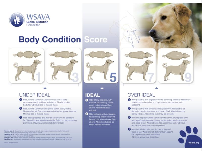 Dog Body Condition Score