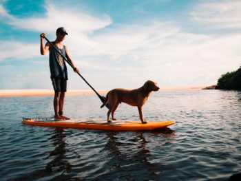 Fun for Dogs + Fun for Dog-lovers