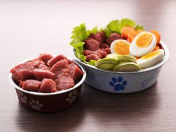 How Much Raw Food Should I Feed Dog