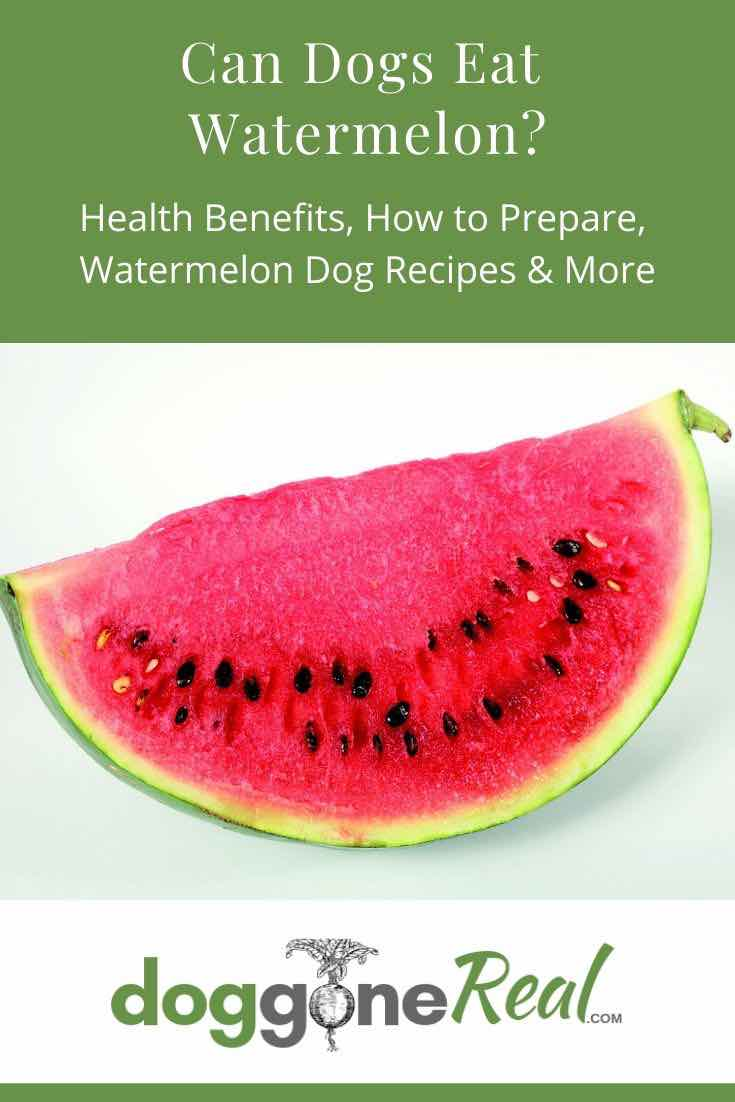 Can Dogs Eat Watermelon Pinterest Image
