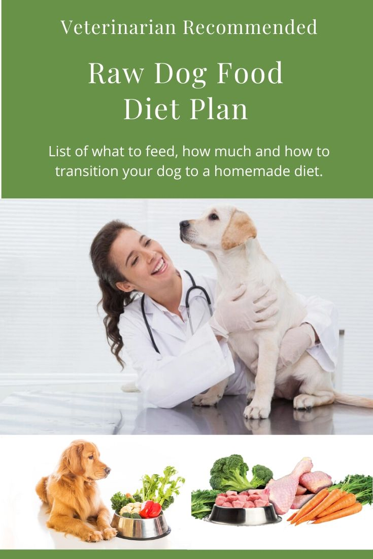 Veterinarian Recommended Raw Dog Food Diet Plan