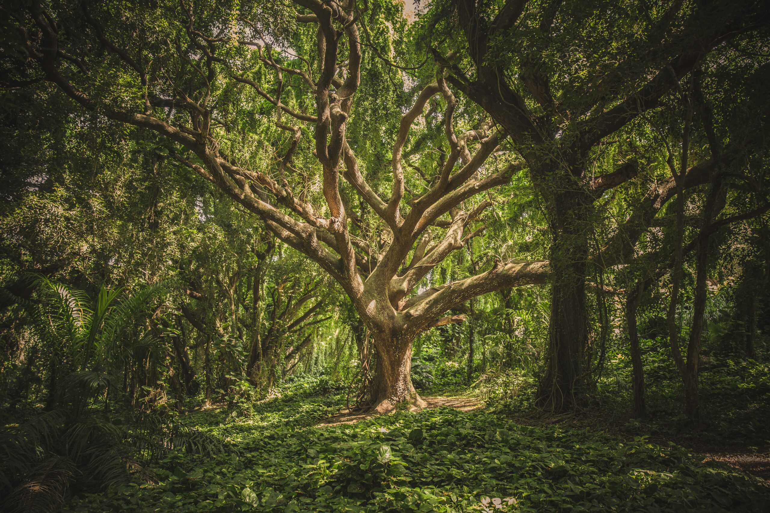 beautiful big tree of life with many branches photo