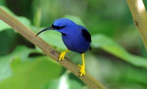 Hummingbirds_165