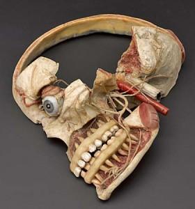 Wax anatomical model of female human head showing internal struc