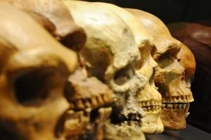 ang-darvin-skulls-BM-Bayern-Berlin